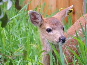 Fawn Closeup Patient
