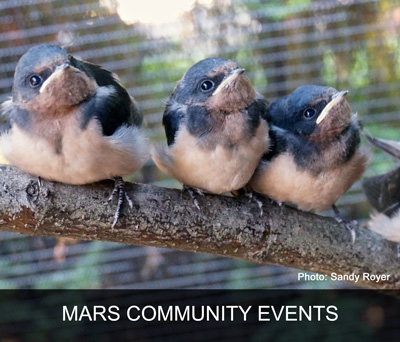 MARS Wildlife Rescue Events