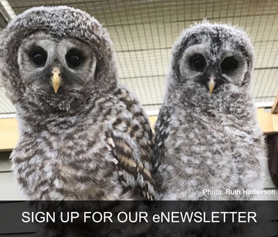 MARS Wildlife Rescue Newsletter Signup