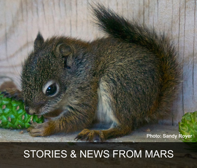 MARS Wildlife Rescue News