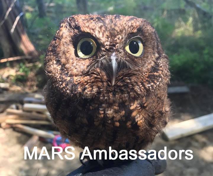 MARS-Ambassadors