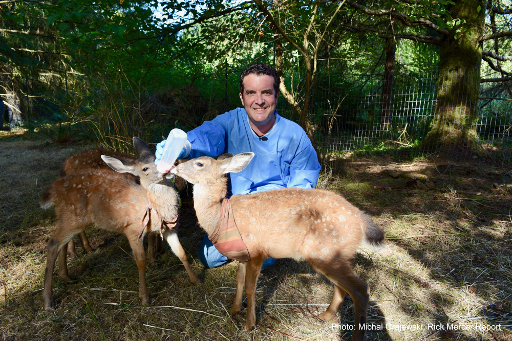 Rick Mercer With Fawns