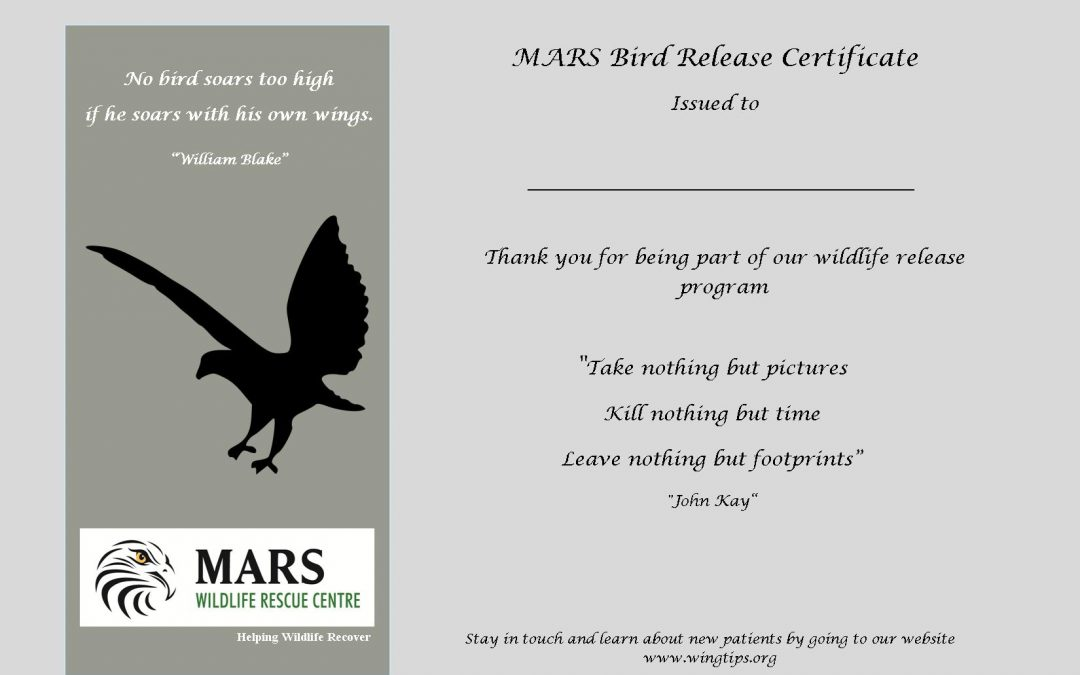 Wildlife Release