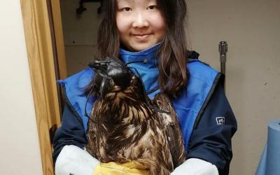 Wildlife Hospital Work Experience